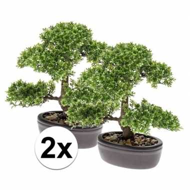 2x ficus mini bonsai kamerplanten 32 cm