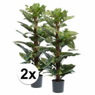 2x philodendron plant 120 cm