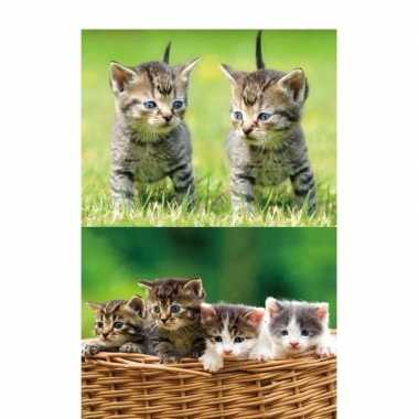 3d koelkast magneetjes met kittens