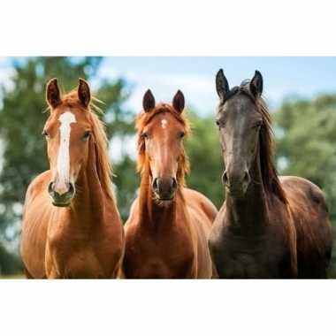 3d magneetje bruine paarden