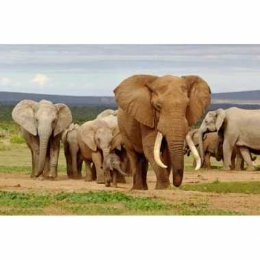 3d magneetje olifanten familie