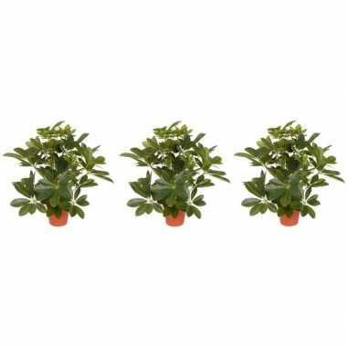 3x schefflera kunstplant 55 cm