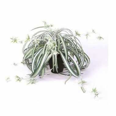 Groen/witte kunstplant graslelie plant in pot 55 cm