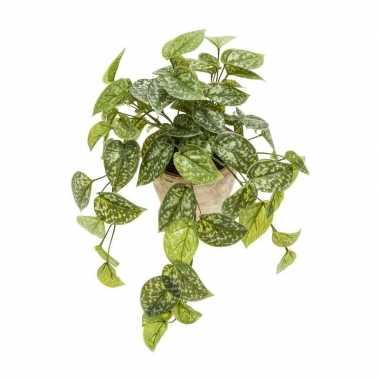 Groene hangende kunstplant scindapsus pictus plant in pot