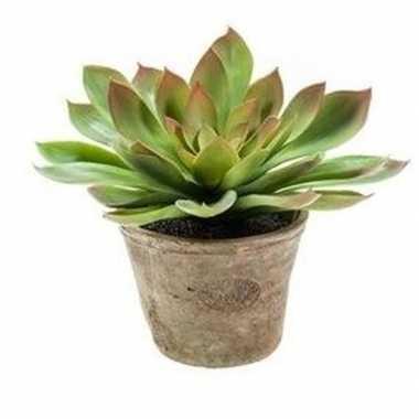 Groene kunstplant echeveria mira plant in pot