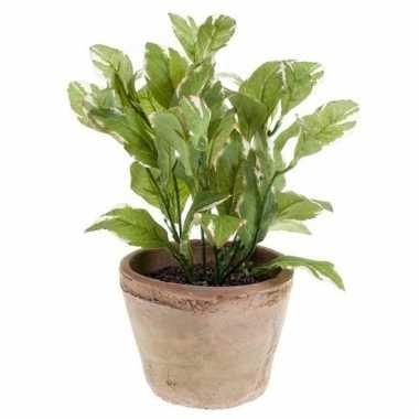 Groene kunstplant laurier kruiden plant in pot