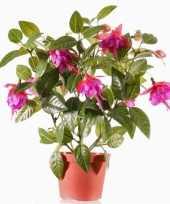 Fuchsia plant in potje 30 cm donkerroze