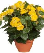 Gele begonia kunstplant 37 cm in terracotta pot