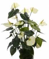 Nep anthurium plant wit 80 cm
