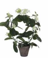 Stephanotis bruidsbloem kunstplant kamerplant wit in grijze sierpot h50 cm x d40 cm